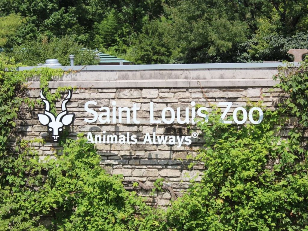 3. St. Louis Zoo - Things to Do in St. Louis
