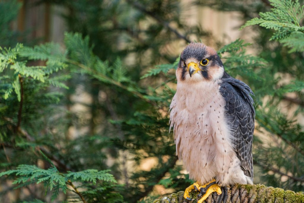 6. Carolina Raptor Center - Things to do in Charlotte NC